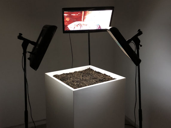 Sofiane Zouggar, plant and politics, Contemporary Algerian art, Memory of Violence, zouggar, video art, algeria civil war, terrorism, photography, soil, experimental art installation, Artefact, Sharjah art, UAE, plants art, Sharjah art Foundation,