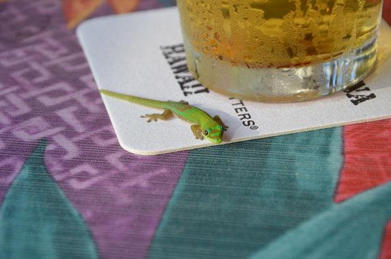 Lahaina-Gecko-Hawaii-Maui