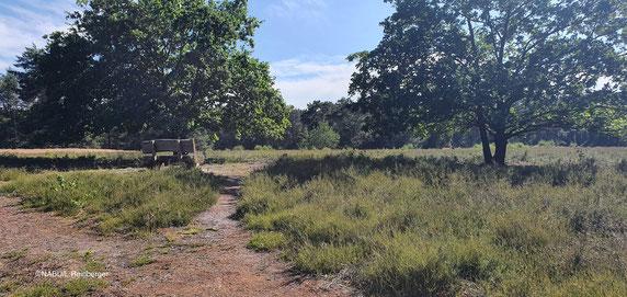 Helstorfer Heide