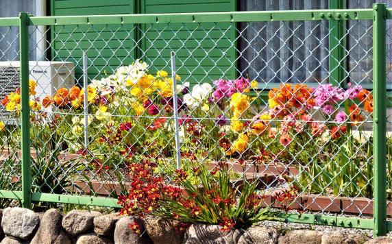 フェンス越しに花壇を見せる(桜ヶ丘地区)
