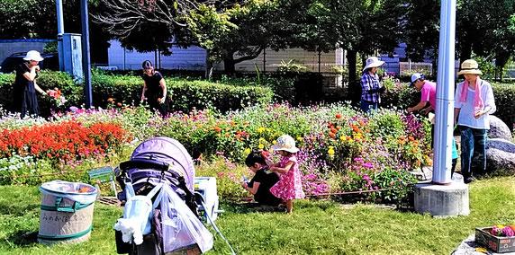 去年の様子ーお花を摘む人々(古井戸公園)