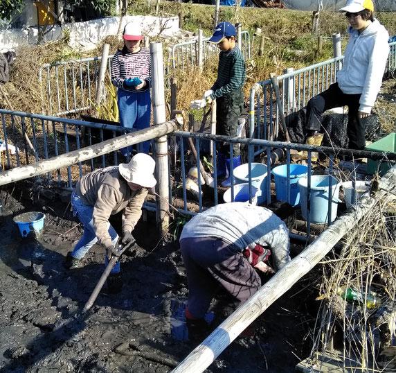まず女性を含む大人が泥を除く。お天気もよく、寒中でも体はポカポカ・・