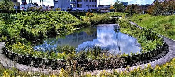 木戸が池緑地・・右手斜面のすそにスイセンを植栽