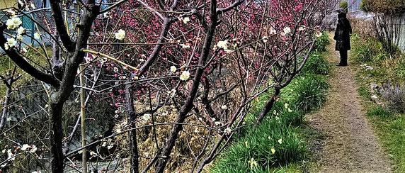 梅の花~数輪でもホッと