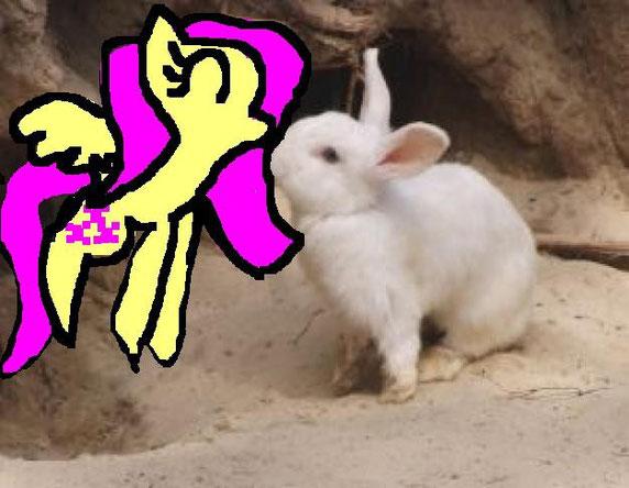 fluttershy e un coniglietto!
