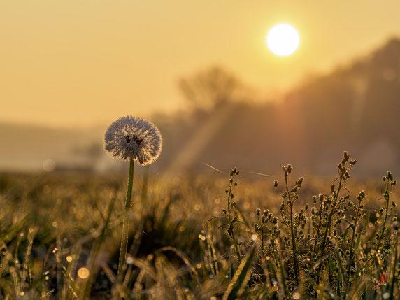 Sonnenstrahl trifft Morgenfrost. (na, ja fast ;)
