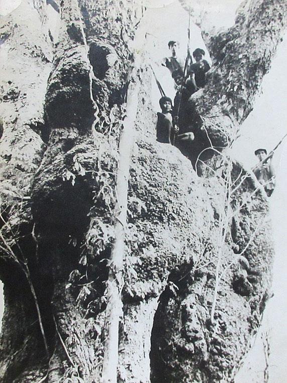 昭和40年頃撮影