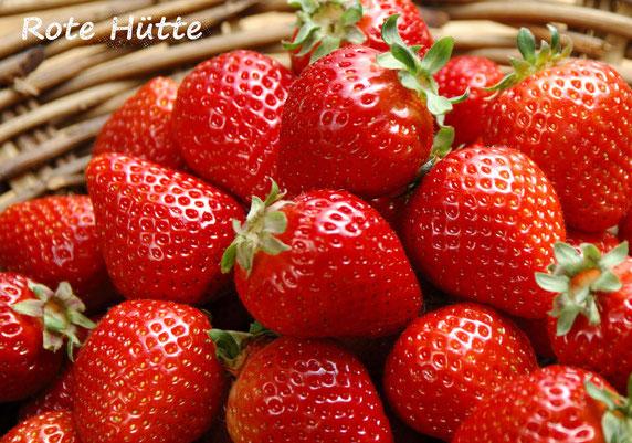 Erdbeeren, Rote Hütte, Vösendorf, Erdbeer, Laxenburger Straße 177, Früchte, Obst, Steiermark