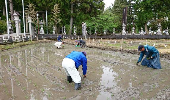 伊勢神宮献穀田でファーム三ケ北部の人が田植え