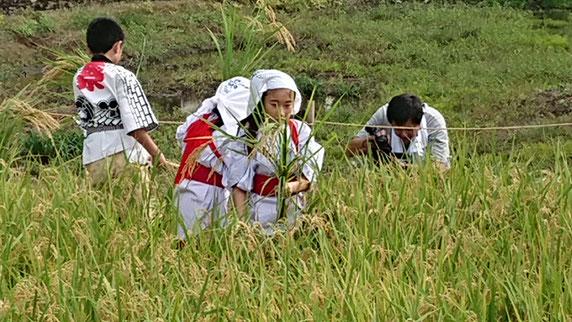 十社大神 イセヒカリ 収穫