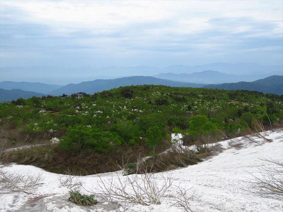 ▲頂上から下る途中。眼前の緑の木々の中に白い雲のようにタムシバが咲き本当に美しい。左奥に小さく池塘が見える。登山道はその方向。