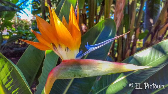 Botanischer Garten, Teneriffa