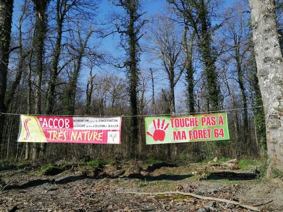 ACCOB -SOS Forêt Pyrénées et Touche Pas à Ma Forêt, ensembles pour défendre la forêt  du Bager d'Oloron (64400)ce 21 mars 2021- ACCOB