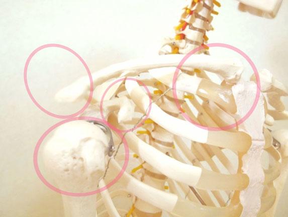 肩こり 肩鎖関節 胸鎖関節 肩峰下関節 肩甲上腕関節 肩甲胸郭関節