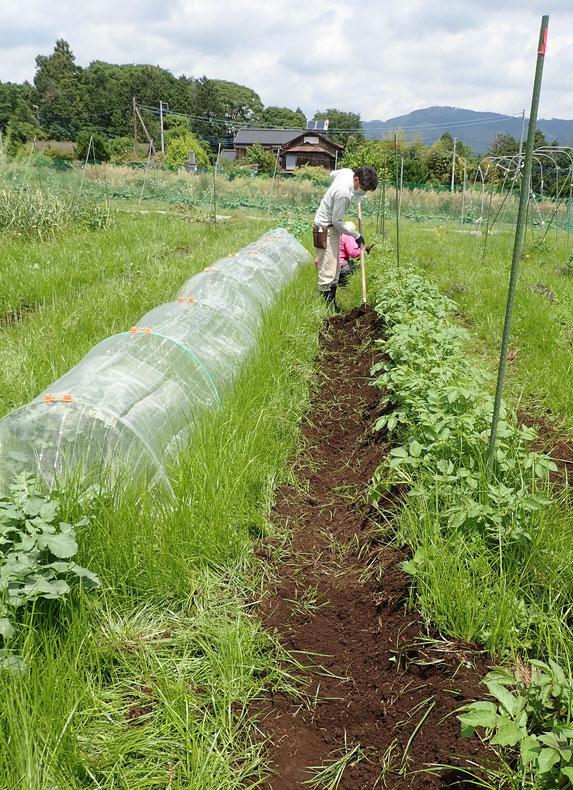 農業体験神奈川 野菜作り教室神奈川 自然栽培神奈川