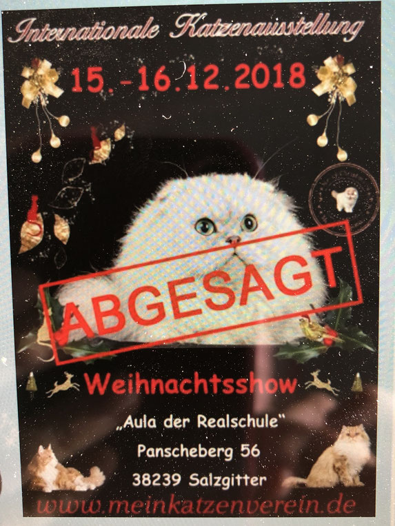 Plakat: Katzenverein Christal Palace Cats. e.V.
