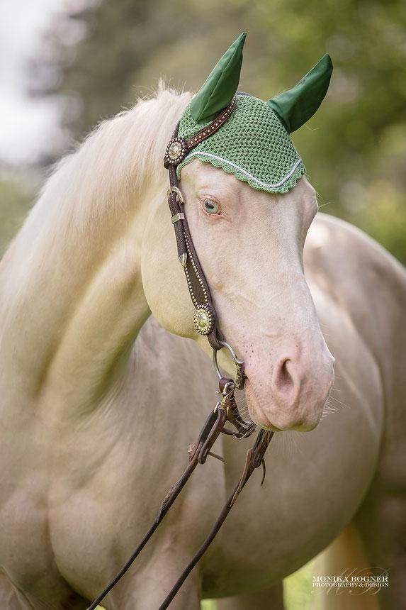 Bemützt Quarter Horse