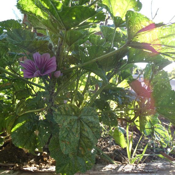 Photo d'illustration prise dans mon jardin (06/05/2020).