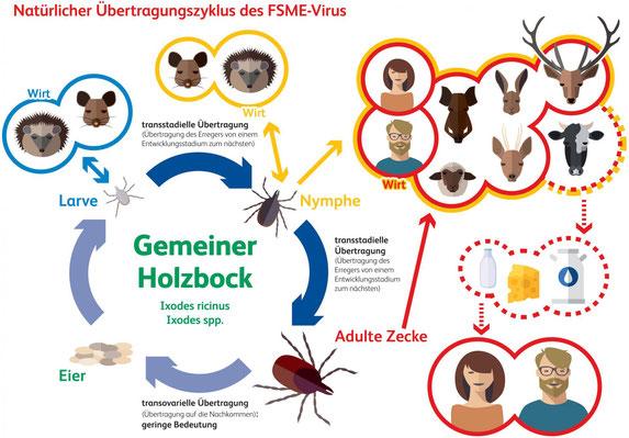 Lebenszyklus und Wirtespektrum von Zecken. Quelle: www.zecken.de