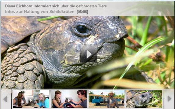 Zum Video auf der Homepage von HundKatzeMaus bzw. Vox