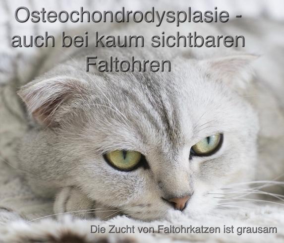 Osteochondrodysplasie - auch bei kaum sichtbaren Faltohren