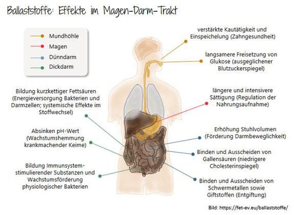 Ballaststoffe Lowcarb Diabetes RangerPower Backmischungen Blog Darmgesundheit Gluten Allergene
