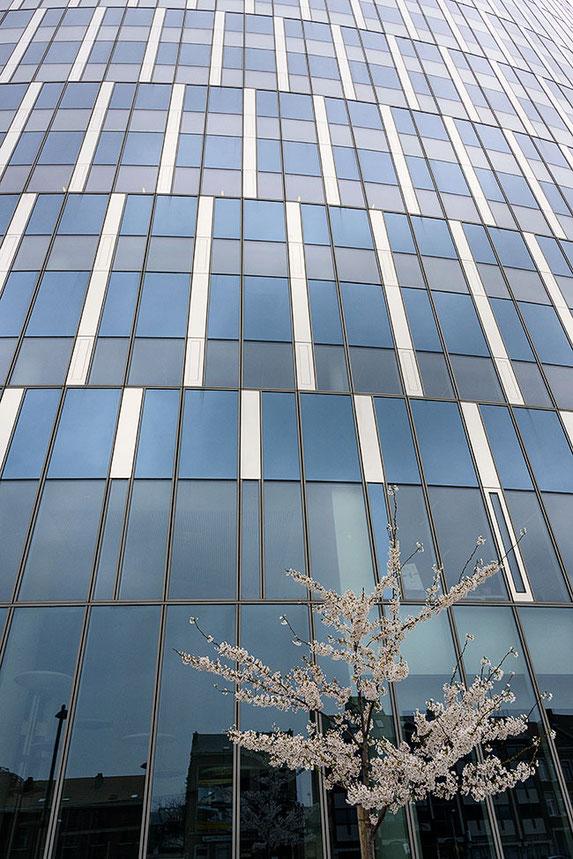 Kirschblüte vor Glasfassade. NIKON Z7, Z-NIKKOR 24-70mm 1:4S. Foto: Dr. Klaus Schörner