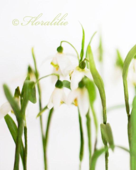 Zucker Schneeglöckchen von Floralilie