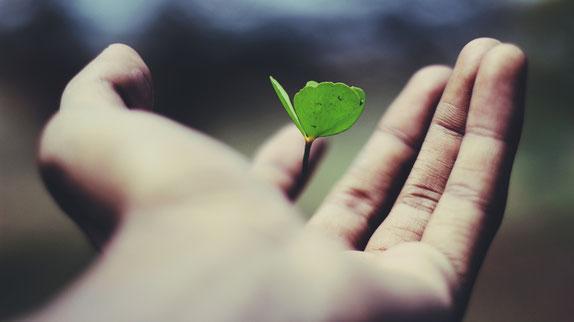 main_en_gros_plan_dans_laquelle_pousse_ une _petite_plante