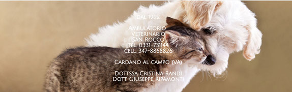 Ambulatorio Veterinario San Rocco - Cardano al Campo