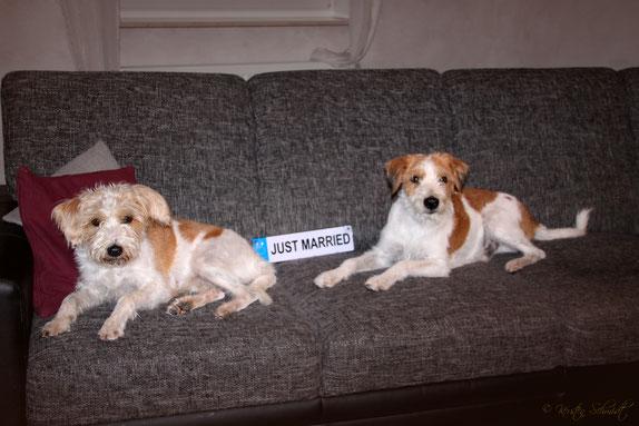 28.08.2019: Nach 2 erfolgreichen Deckakten binnen 3 Stunden ruhen sich Aila & Kabou auf dem Sofa aus.