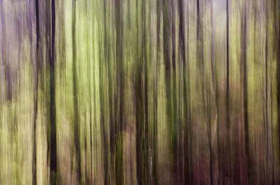 """""""Paysage végétal"""". 2017. Photographie numérique. 7 exemplaires. Tirage 60x90 cm, papier Hahnemühle."""