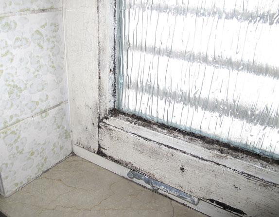 Schimmel an einem Fensterflügel