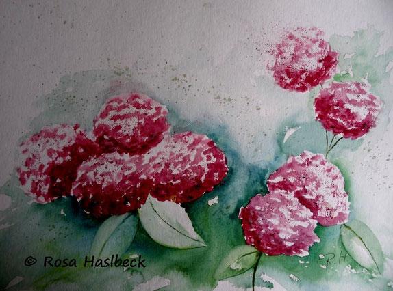 Hortensienaquarell 37 x 48 cm