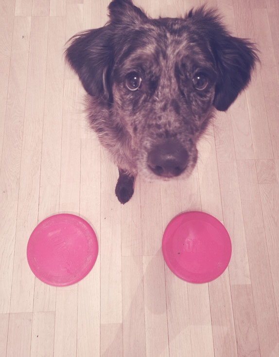 «J'ai deux frisbee identiques, mais je t'assure ce n'est pas du superflu...»