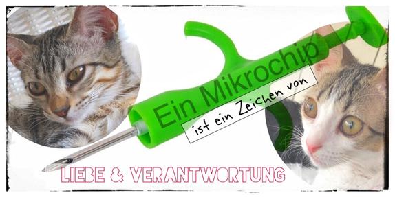 Eine Katze ohne Mikrochip ist ein Nobody, ein Mikrochip ist ein Zeichen von Liebe und Verantwortung