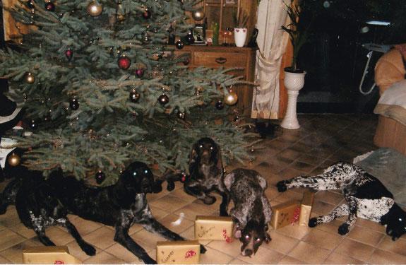 """Weihnachten beim Zwinger """"von der Wacholderheide"""" - von links nach rechts: Ira Pöttmes - Conner von der Wacholderheide - Calimero von der Wacholderheide - Lonely KS Pöttmes - Amigo KS von der Wacholderheide"""