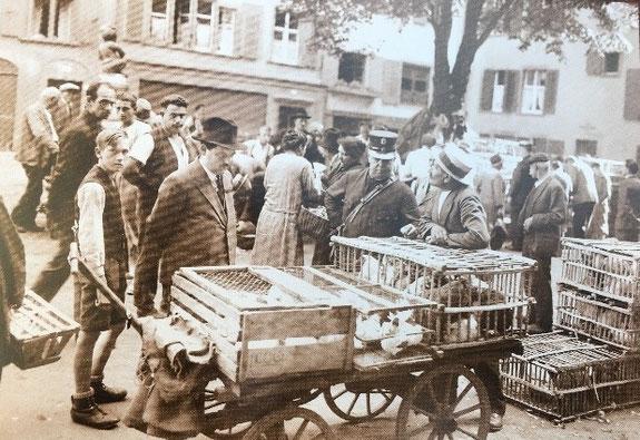 Märkte auf dem Andreasplatz im 20. Jahrhundert: Geflügelmarkt/ Wildbretmarkt