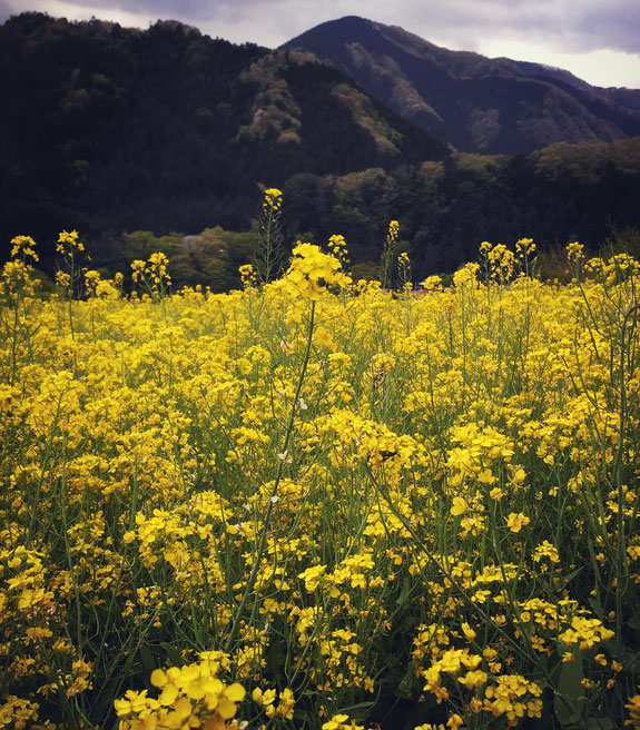 Flower field on the way all rights reserved by onegai kaeru