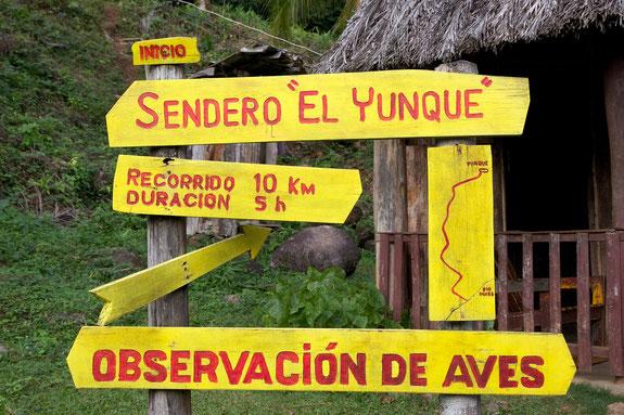 El Yunque Trail Puerto Rico, Karibik, Karibische Inseln