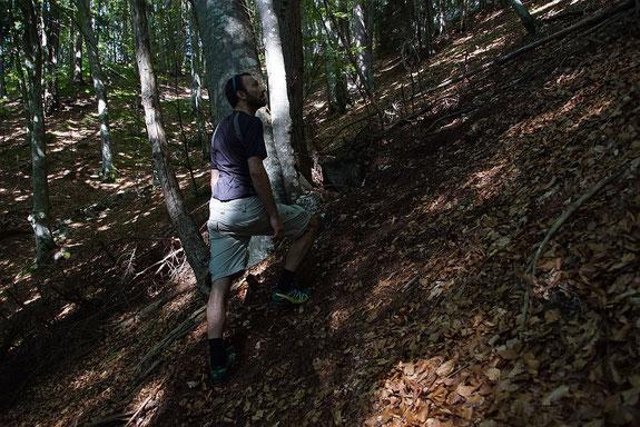 Raketensteig im Waldanstieg von Kadutschen aus