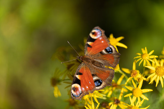 Natur beobachten und schützen.  Foto: A. von Brill