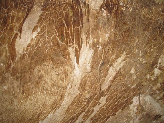 Mycel des Echten Hausschwamms