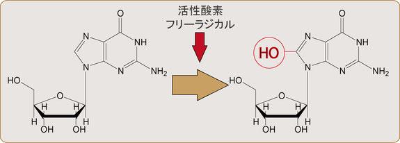 画像:8-OHdG、活性酸素・フリーラジカル
