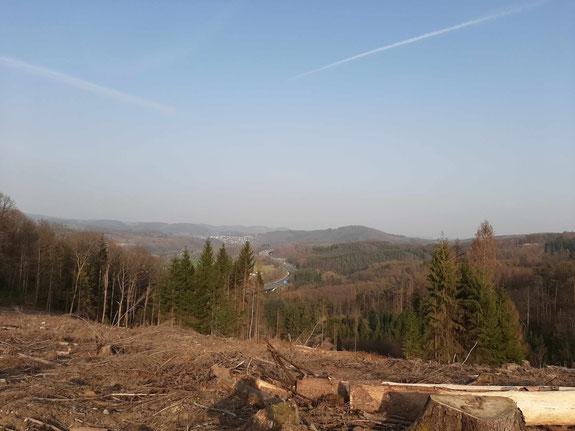 Sterbende Wälder im Umkreis