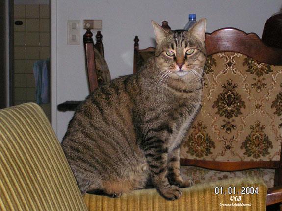 Spanische Katze Norbert. Geburtsort Peniscola Spanien.