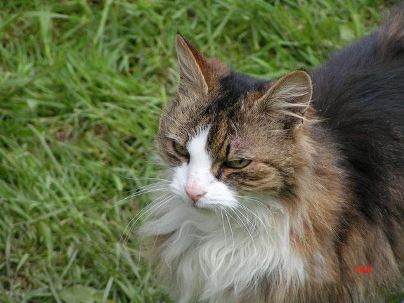 Katze mit Namen Wuschel