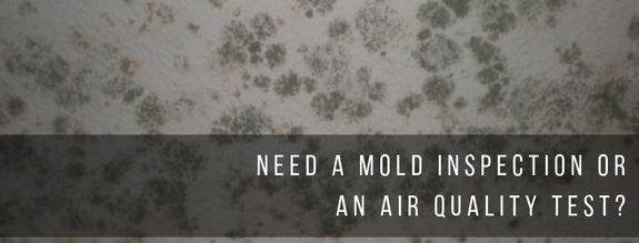 mold removal lakeland