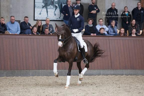 Blue Hors Don Olymbrio mit Reiter Daniel Bachmann Andersen beim Training in Dänemark in einer Trabpiorette