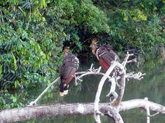 Fauna und Flora im peruanischen Amazonasgebiet sind atemberaubend